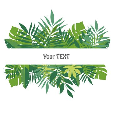 Banner with tropical leaves. The design for the background template, advertising materials, labels, packaging. Vector illustration.