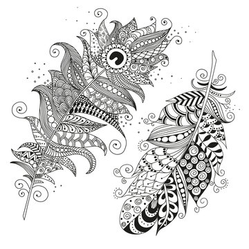 Hand drawn zentangle feather on white background