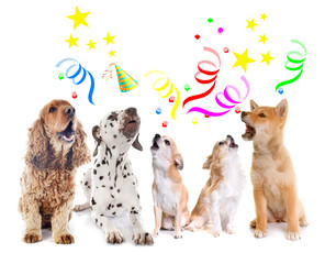 Fototapete - dogs howling for birthday