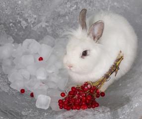 white rabbit and berries