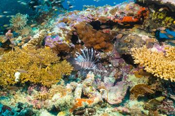 Bunte Unterwasserwelt der Malediven mit Korallen und einem Rotfeuerfisch