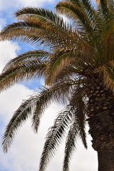 Palm tree - low angle view