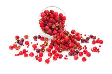 Sweet flavorful raspberry ,currants, gooseberries .