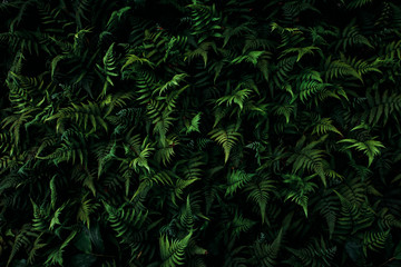 leafy green fern background