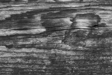 Texture of wood monochrome photo