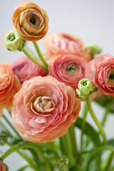 A Bouquet Of Fresh Picked Ranunculus Flowers