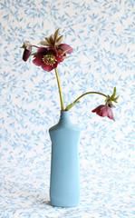 Helleborus flowers in a vase