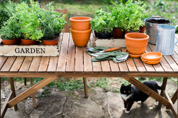 Table set for repotting herbs