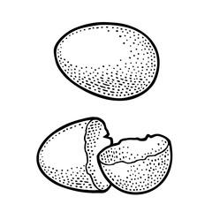 Broken Egg shell. Vintage black engraving illustration