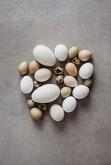Eggs on concrete