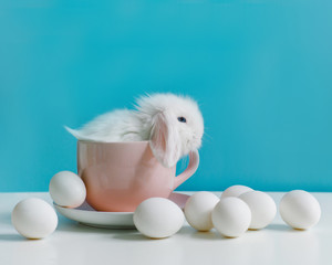 Little white rabbit in a mug