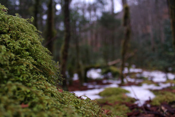 Macro Nature Photography of Moss Covering a Rock in the Deep Woods