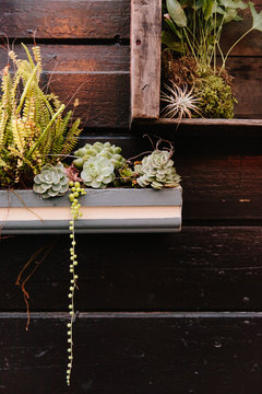 Succulents in wall boxes