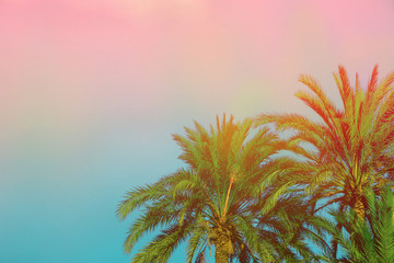 Palm Trees on Toned Purple Blue Pink Sky Background with Golden Sun Flare. Copy Space for Text. Tropical Foliage. Seaside Ocean Beach Vacation. Modern Funky Style