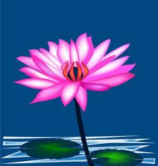 Lotus pink plant icon vector