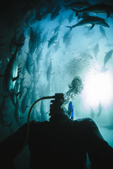 Scuba diver surrounded by deep sea fish