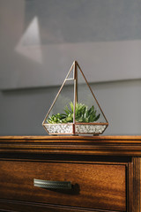 Succulent at Home