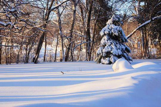 Beautiful winter morning landscape. Scenic view with a spruce and fresh snow that is striped by the shadows of trees during the sunrise.