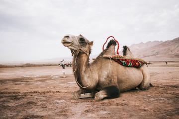 Camel in Flaming Mountains, Turpan