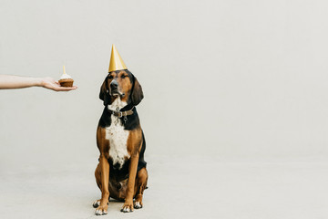 Man holding a cupcake while celebrating the dog's birthday