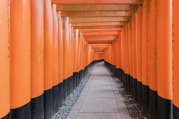 Thousands of vermilion torii gates at Fushimi Inari shrine in Kyoto