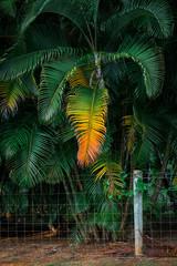 colorful tropical palm leaf