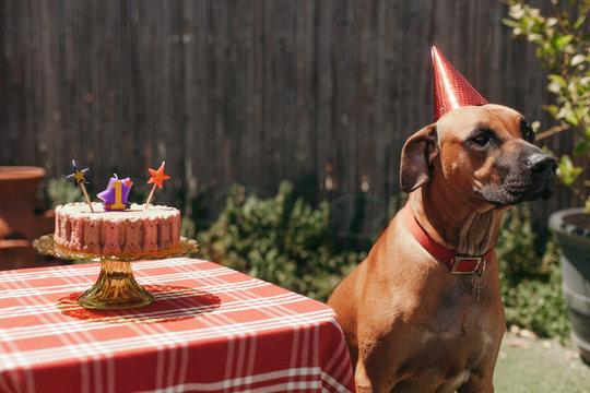 Cowboy's First Birthday