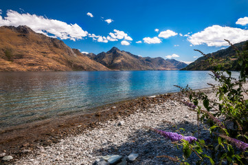 Beautiful view of Lake Wakatipu from the rocky shore with purple flowers in the foreground and mountain range in the background, Queenstown, New Zealand's Southern Island.
