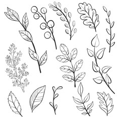 vector doodle leaves and plants