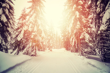 Retro stylized picture of a winter forest with cross country skiing tracks at sunset.