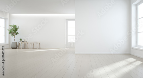 Indoor Plant On Wooden Floor With White Wall Background In Large