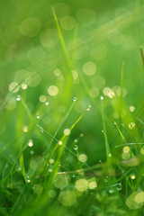 spring grass background. bright green grass with water drops. natural backgrounds with green grass in a cool tone