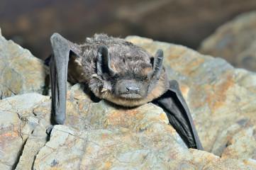 Small bat 16