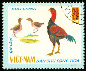 Ukraine - circa 2018: A postage stamp printed in Vietnam shows drawing Fighting Rooster - Gallus gallus domesticus. Series: Domestic fowl. Circa 1968.