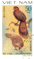 Ukraine - circa 2018: A postage stamp printed in Vietnam shows drawing Germain's Peacock-pheasant - Polyplectron germaini. Series: Pheasants. Circa 1978.