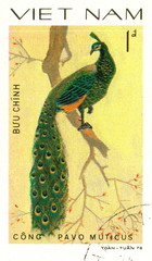 Ukraine - circa 2018: A postage stamp printed in Vietnam shows drawing Green Peafowl - Pavo muticus. Series: Pheasants. Circa 1978.