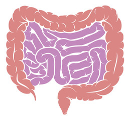 Diagram of Intestine Gut Digestive System