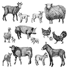 Farm baby mother animals set. Hand draw line art style illustration. Sketch of cute calf, duck, lamb, goat, chicken, pig, donkey and rooster. BLack and white vector image.