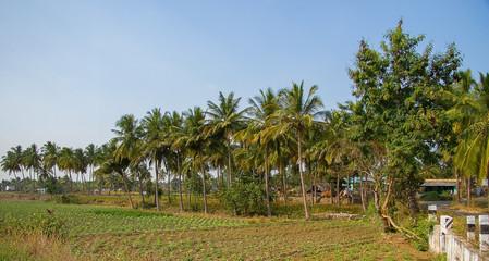 Landscape of Southern India farmland