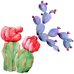 Wildflower cactus in a watercolor style isolated. Full name of the plant: cactus. Aquarelle wild flower for background, texture, wrapper pattern, frame or border.