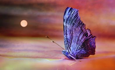Siedzący motyl wygląda jak żaglówka wyrzucona z morza na pustyni.