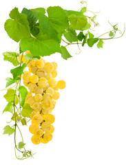 Wall Mural - raisin blanc et vigne, fond blanc