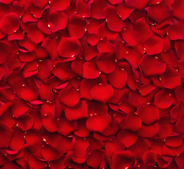 Foto auf Acrylglas Roses Background of red rose petals