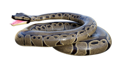 3D Rendering Ball Python on White