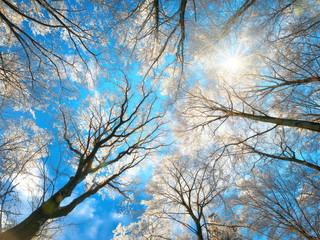 Wald im Winter mit verschneiten Baumkronen und der Sonne am blauen Himmel