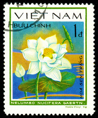 Ukraine - circa 2018: A postage stamp printed in Vietnam shows drawing flower White lotus or Nelumbo nucifera. Series: Aquatic flowers. Circa 1978.