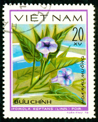Ukraine - circa 2018: A postage stamp printed in Vietnam shows drawing flower Morning glories or Ipomoea reptans. Series: Aquatic flowers. Circa 1978.