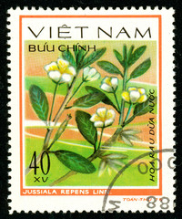 Ukraine - circa 2018: A postage stamp printed in Vietnam shows drawing flower Jussiaea repens. Series: Aquatic flowers. Circa 1978.