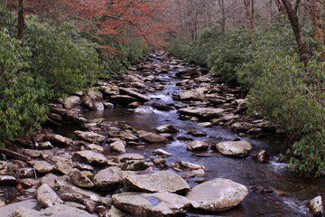 Hiking Through the Mountain Woods we Found a Small Rocky River
