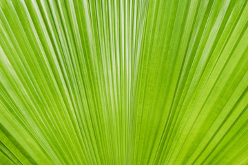 abstract of green leaf texture for background